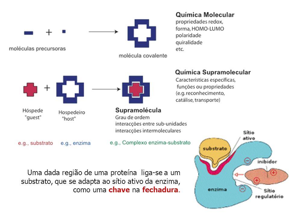 15 Uma dada região de uma proteína liga-se a um substrato, que se adapta ao sítio ativo da enzima, como uma chave na fechadura.
