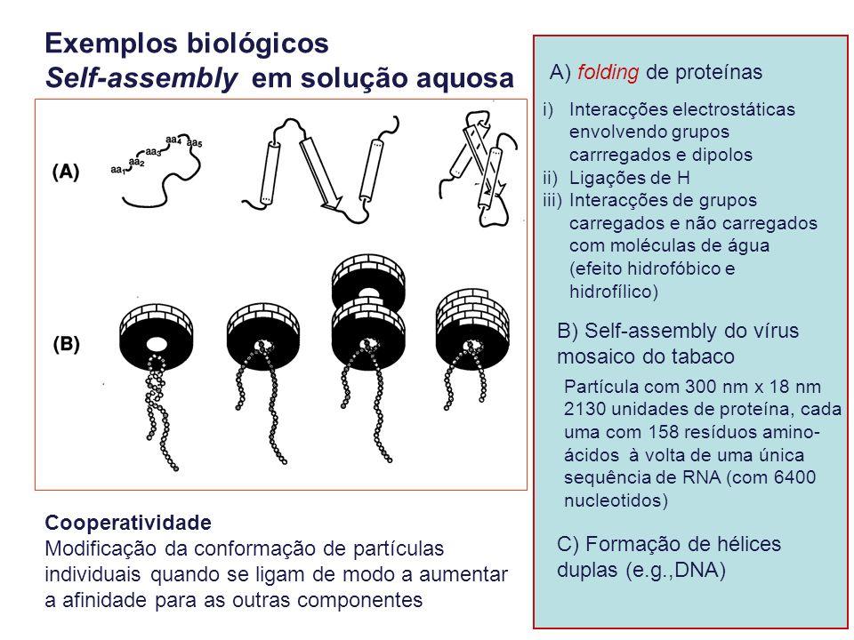 19 A) folding de proteínas B) Self-assembly do vírus mosaico do tabaco Exemplos biológicos Self-assembly em solução aquosa i) Interacções electrostáti