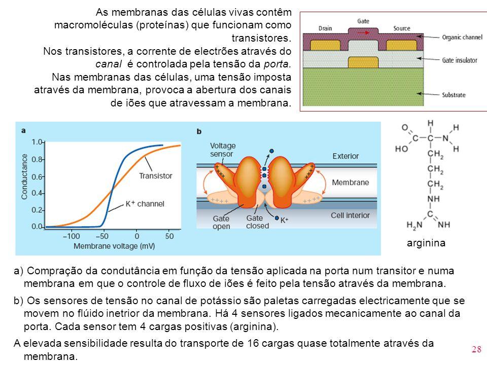 28 As membranas das células vivas contêm macromoléculas (proteínas) que funcionam como transistores. Nos transistores, a corrente de electrões através