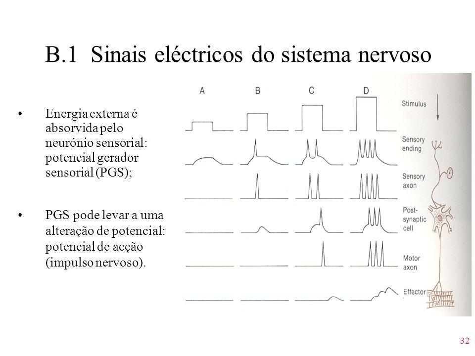 32 B.1 Sinais eléctricos do sistema nervoso Energia externa é absorvida pelo neurónio sensorial: potencial gerador sensorial (PGS); PGS pode levar a u