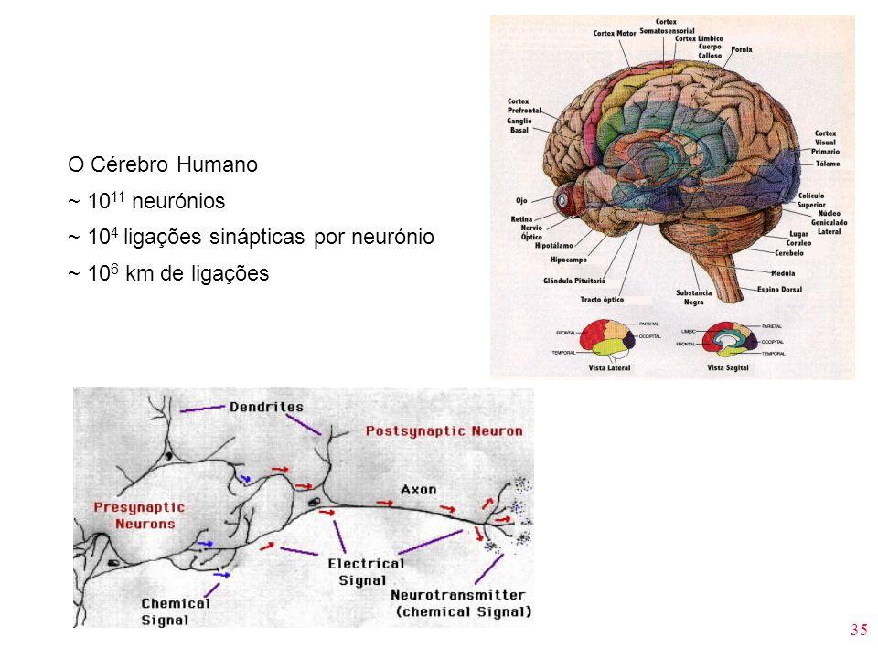 35 O Cérebro Humano ~ 10 11 neurónios ~ 10 4 ligações sinápticas por neurónio ~ 10 6 km de ligações