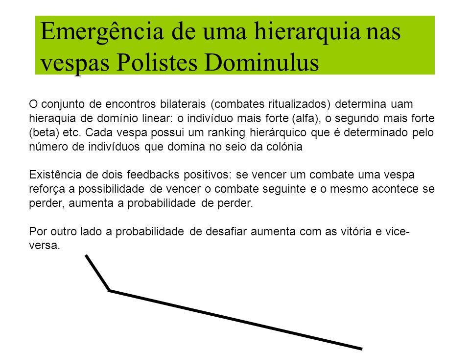 Emergência de uma hierarquia nas vespas Polistes Dominulus O conjunto de encontros bilaterais (combates ritualizados) determina uam hieraquia de domín