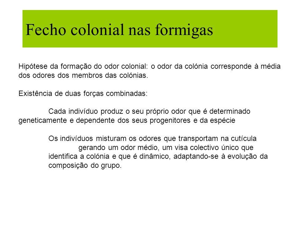 Fecho colonial nas formigas Hipótese da formação do odor colonial: o odor da colónia corresponde à média dos odores dos membros das colónias. Existênc