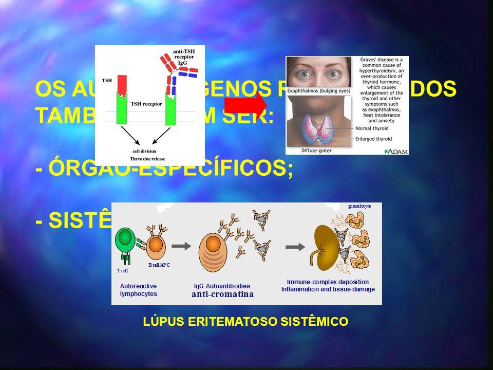 OS AUTO-ANTÍGENOS RECONHECIDOS TAMBÉM PODEM SER: - ÓRGÃO-ESPECÍFICOS; - SISTÊMICOS; LÚPUS ERITEMATOSO SISTÊMICO anti-cromatina