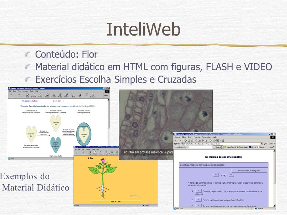 InteliWeb Conteúdo: Flor Material didático em HTML com figuras, FLASH e VIDEO Exercícios Escolha Simples e Cruzadas Exemplos do Material Didático