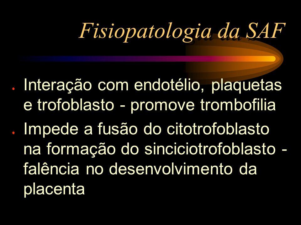 Fisiopatologia da SAF l Interação com endotélio, plaquetas e trofoblasto - promove trombofilia l Impede a fusão do citotrofoblasto na formação do sinc