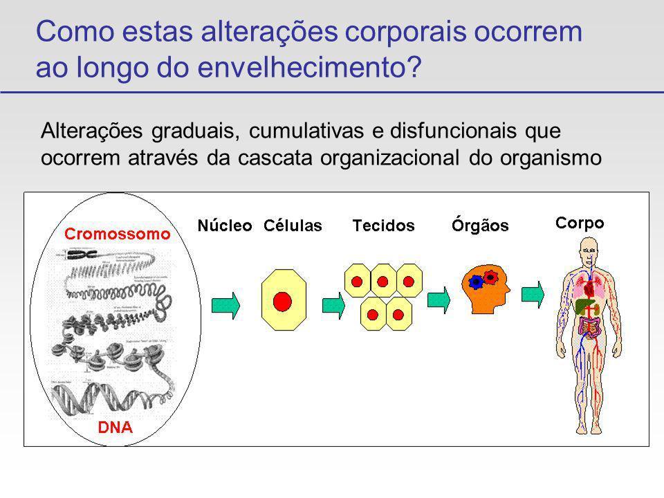 Macromoléculas e Envelhecimento Proteínas - Sintetizadas Degradadas Turnover Libera aminoácidos Re-utilizados Lisossomos ACÚMULO Resíduos Proteícos Exocitose Eliminados Sistema Urinário Digestão Aminoácidos Ambiente Externo Ambiente Externo Organismo Células OXIDAÇÃO