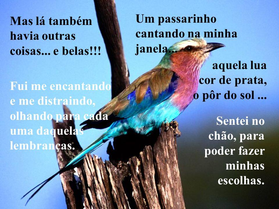 Mas lá também havia outras coisas... e belas!!! Um passarinho cantando na minha janela... Fui me encantando e me distraindo, olhando para cada uma daq