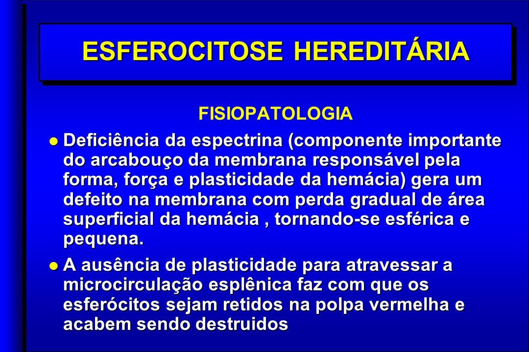 ESFEROCITOSE HEREDITÁRIA FISIOPATOLOGIA l Deficiência da espectrina (componente importante do arcabouço da membrana responsável pela forma, força e plasticidade da hemácia) gera um defeito na membrana com perda gradual de área superficial da hemácia, tornando-se esférica e pequena.