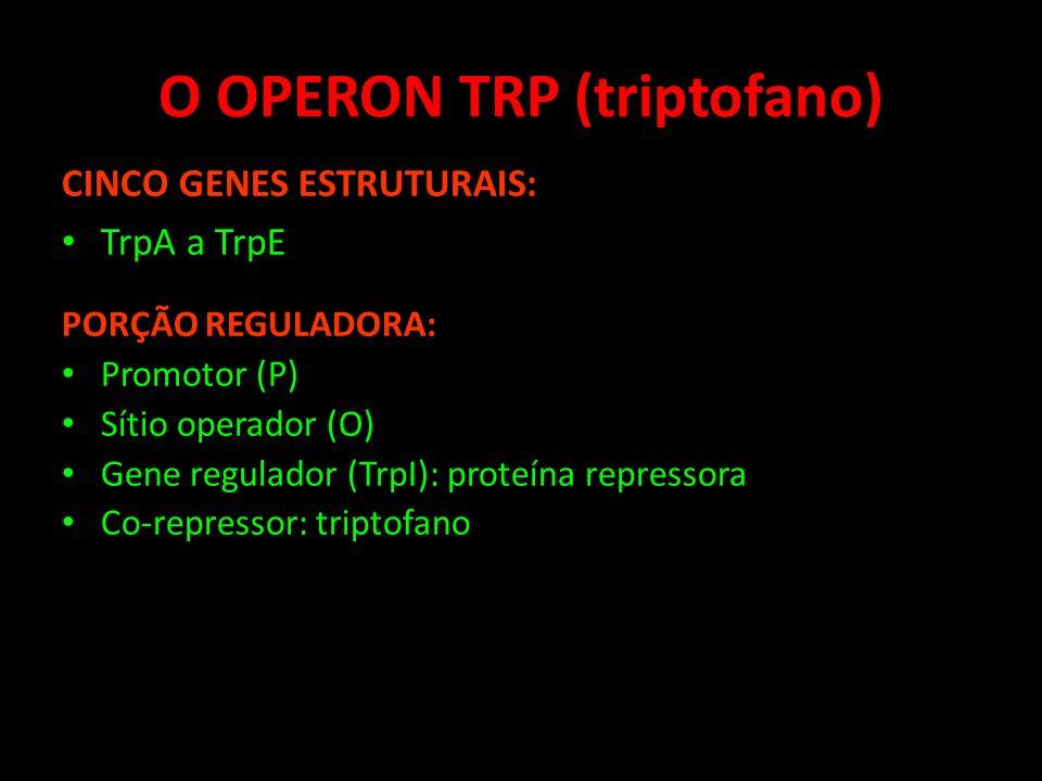 O OPERON TRP (triptofano) CINCO GENES ESTRUTURAIS: TrpA a TrpE PORÇÃO REGULADORA: Promotor (P) Sítio operador (O) Gene regulador (TrpI): proteína repr