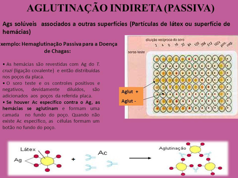 AGLUTINAÇÃO INDIRETA (PASSIVA) Exemplo: Hemaglutinação Passiva para a Doença de Chagas: As hemácias são revestidas com Ag do T. cruzi (ligação covalen