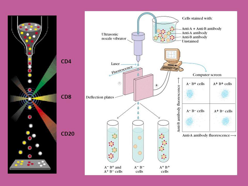 CD4 CD8 CD20