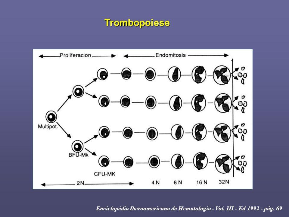 Fonte: CHSP (Jan/1997 à Mar/2004) Guerra et al – Clinical Chemistry Vol. 49, 2003