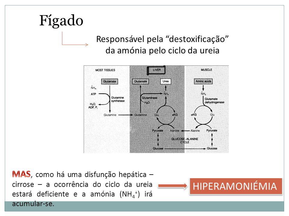 Fígado Responsável pela destoxificação da amónia pelo ciclo da ureia HIPERAMONIÉMIA