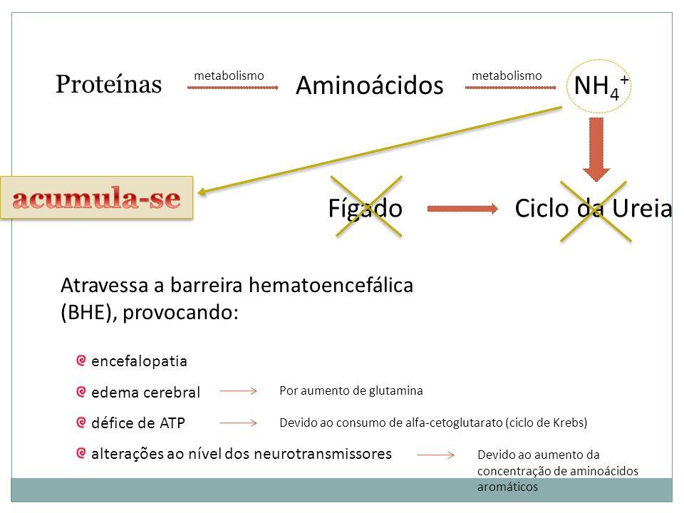 Proteínas Aminoácidos Ciclo da UreiaFígado metabolismo NH 4 + metabolismo encefalopatia edema cerebral défice de ATP alterações ao nível dos neurotransmissores Atravessa a barreira hematoencefálica (BHE), provocando: Por aumento de glutamina Devido ao consumo de alfa-cetoglutarato (ciclo de Krebs) Devido ao aumento da concentração de aminoácidos aromáticos