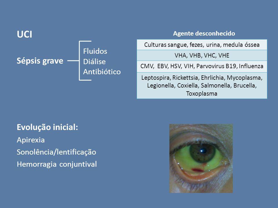 UCI Sépsis grave Evolução inicial: Apirexia Sonolência/lentificação Hemorragia conjuntival Fluidos Diálise Antibiótico Culturas sangue, fezes, urina,