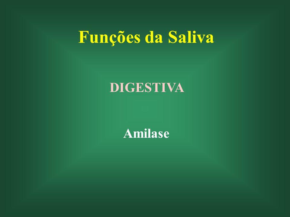 Funções da Saliva LUBRIFICANTE Essa função é facilitada pelo conteúdo de mucina Auxilia também na formação do bolo alimentar Deglutição Fala