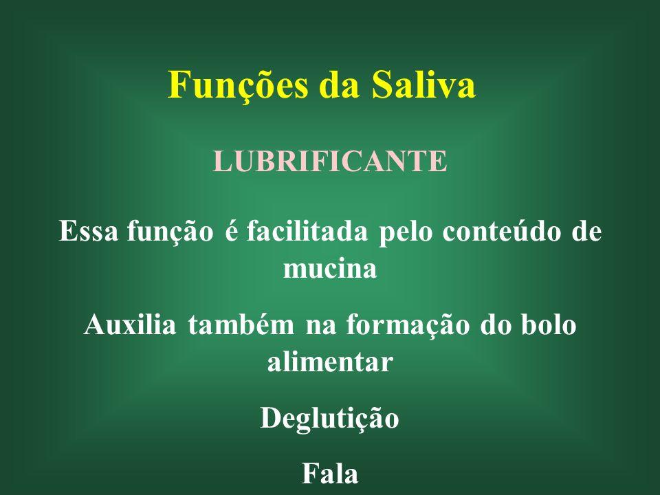 Funções da Saliva SOLVENTE Substâncias com propriedades de sabor Percepção de sabor (sal)