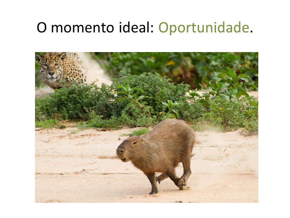 O momento ideal: Oportunidade.