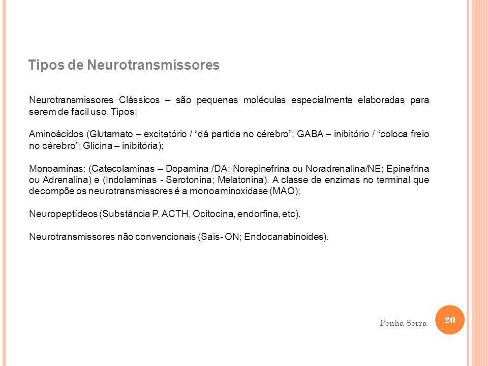 Tipos de Neurotransmissores Neurotransmissores Clássicos – são pequenas moléculas especialmente elaboradas para serem de fácil uso. Tipos: Aminoácidos