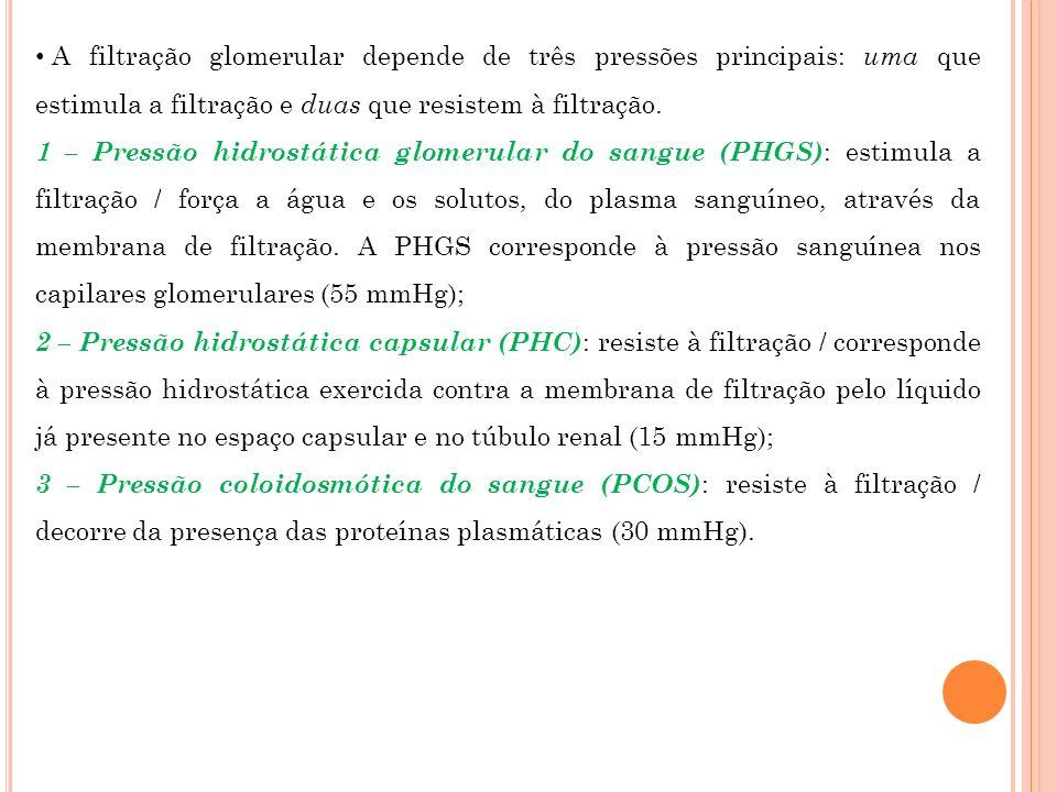 A filtração glomerular depende de três pressões principais: uma que estimula a filtração e duas que resistem à filtração. 1 – Pressão hidrostática glo
