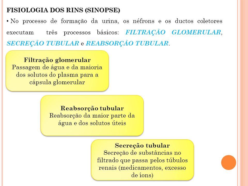 FISIOLOGIA DOS RINS (SINOPSE) No processo de formação da urina, os néfrons e os ductos coletores executam três processos básicos: FILTRAÇÃO GLOMERULAR