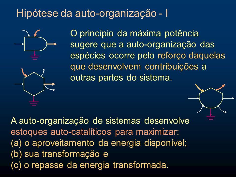Hipótese da auto-organização - II A auto-organização ocorre sob dois paradigmas: a.Quando há muita energia disponível a cadeia cresce com poucas linhas em paralelo (baixa biodiversidade, pode haver alta concentração de uma espécie).