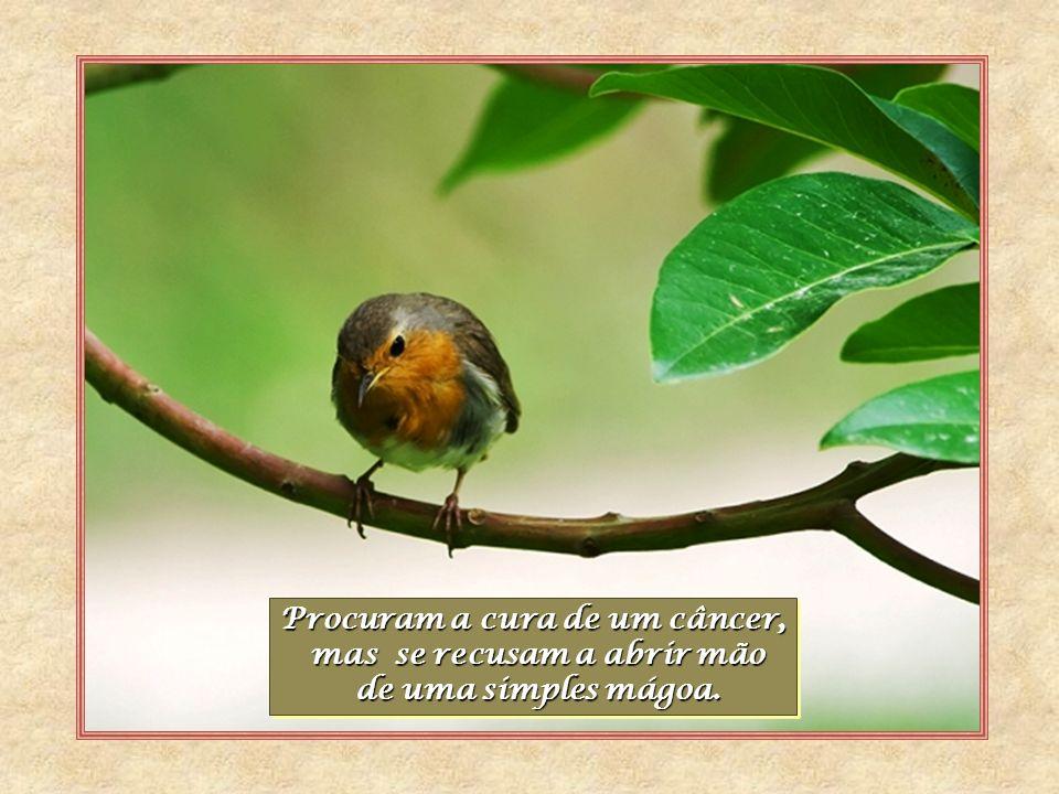 Autor - José Carlos De Lucca Livro - O Médico Jesus Musica – Eternity- E.