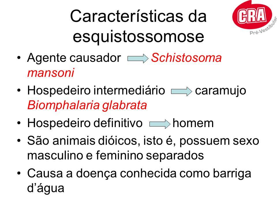 Características da esquistossomose Agente causador Schistosoma mansoni Hospedeiro intermediário caramujo Biomphalaria glabrata Hospedeiro definitivo h