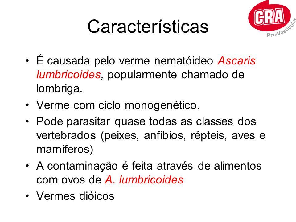 Características É causada pelo verme nematóideo Ascaris lumbricoides, popularmente chamado de lombriga. Verme com ciclo monogenético. Pode parasitar q