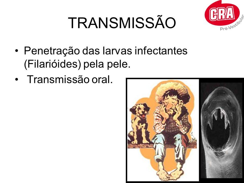 TRANSMISSÃO Penetração das larvas infectantes (Filarióides) pela pele. Transmissão oral.