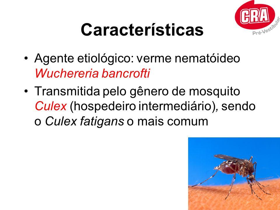 Características Agente etiológico: verme nematóideo Wuchereria bancrofti Transmitida pelo gênero de mosquito Culex (hospedeiro intermediário), sendo o