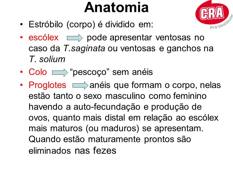 Anatomia Estróbilo (corpo) é dividido em: escólex pode apresentar ventosas no caso da T.saginata ou ventosas e ganchos na T. solium Colo pescoço sem a