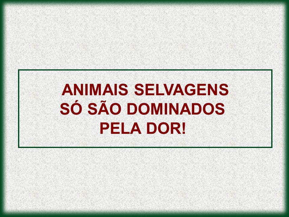 ANIMAIS SELVAGENS SÓ SÃO DOMINADOS PELA DOR!