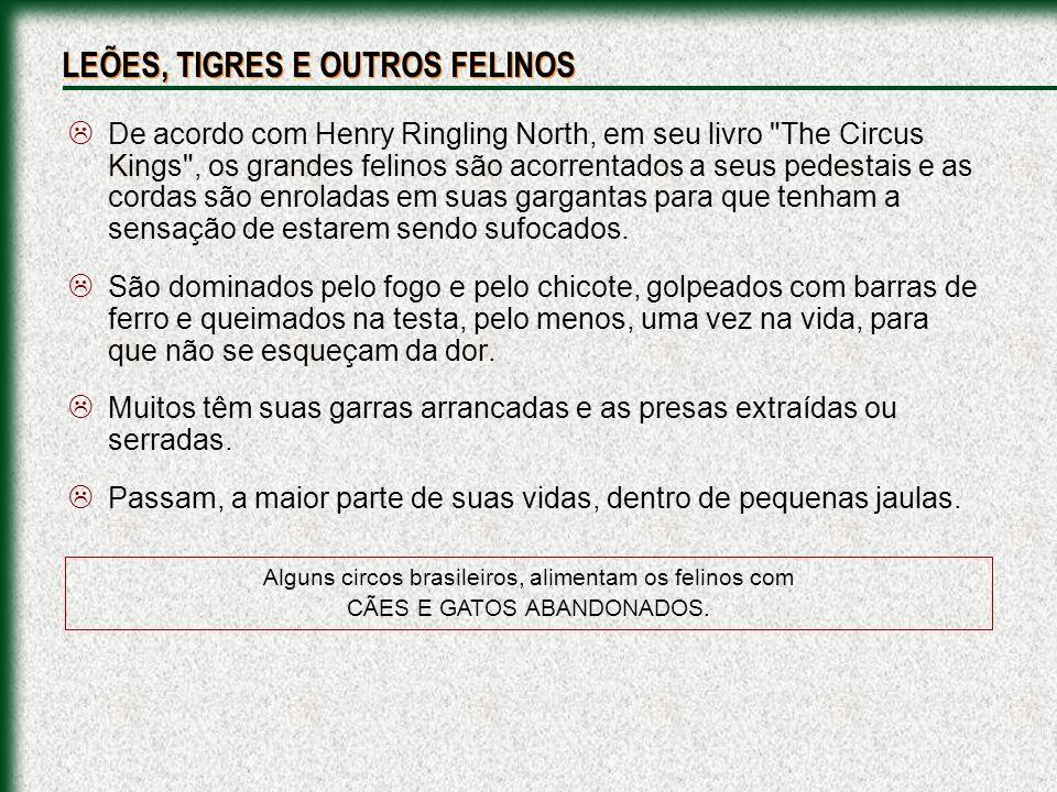 Alguns circos brasileiros, alimentam os felinos com CÃES E GATOS ABANDONADOS. De acordo com Henry Ringling North, em seu livro