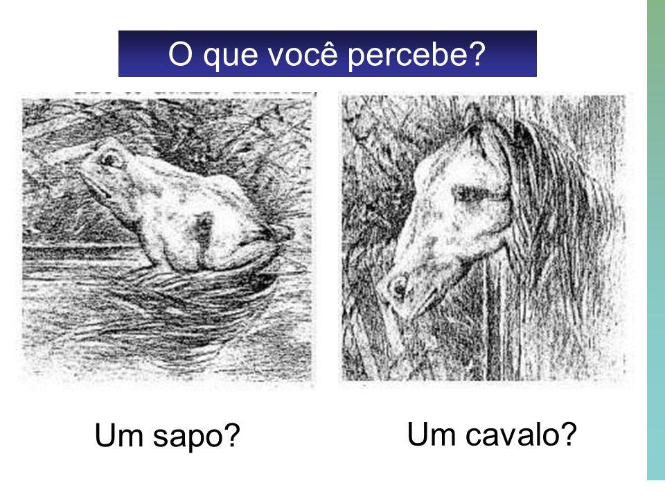 41 O que você percebe? Um sapo? Um cavalo?