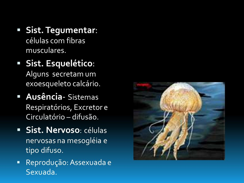 Sist.Tegumentar: células com fibras musculares. Sist.