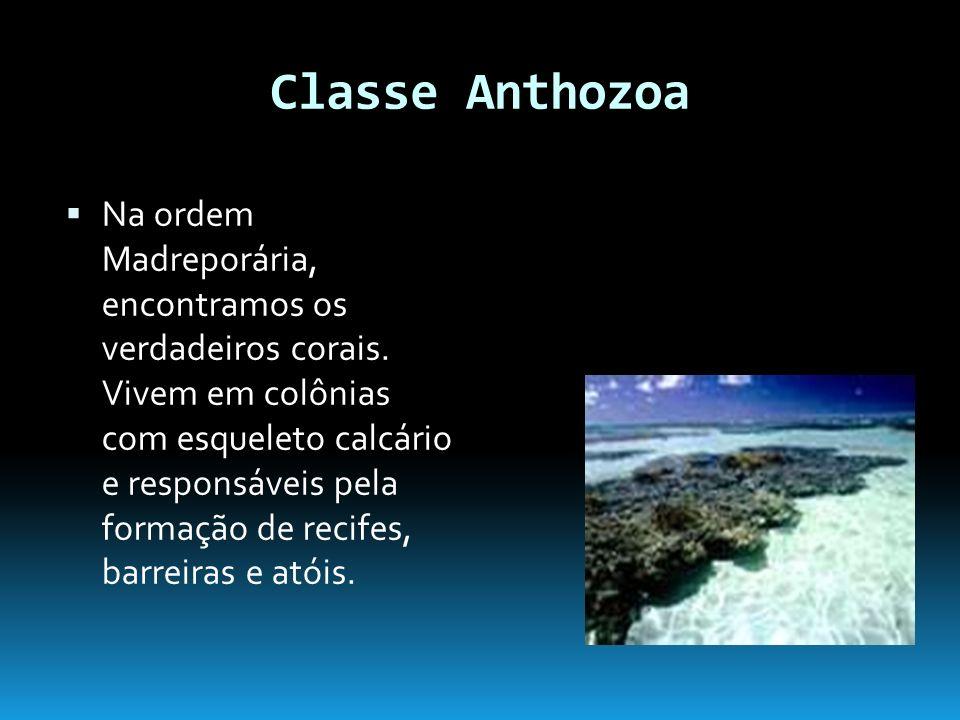 Classe Anthozoa Na ordem Madreporária, encontramos os verdadeiros corais.