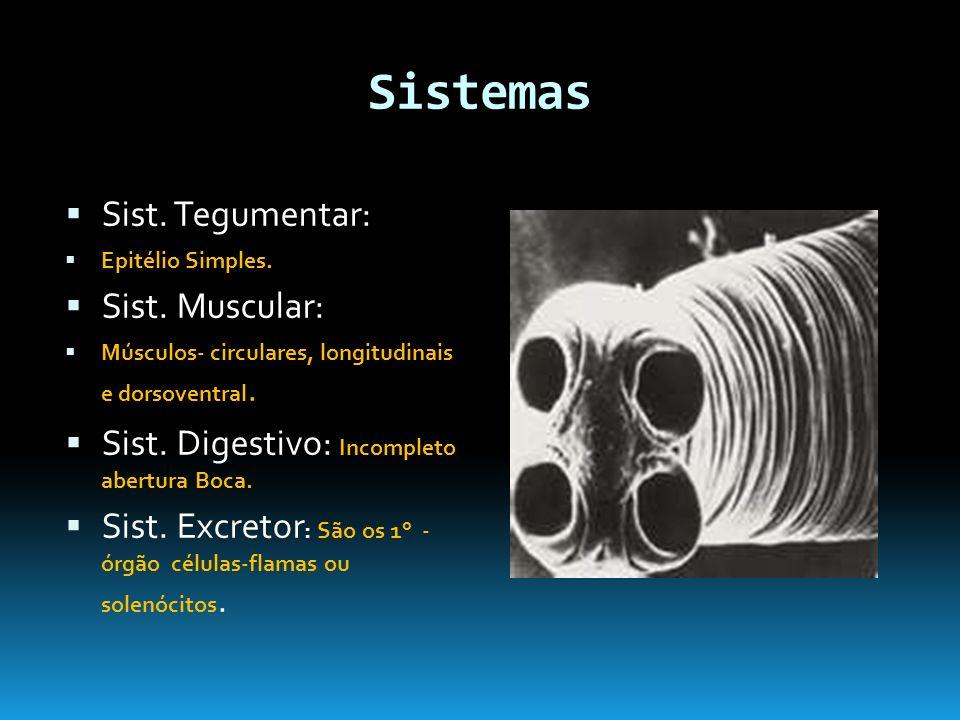 Sistemas Sist.Tegumentar: Epitélio Simples. Sist.