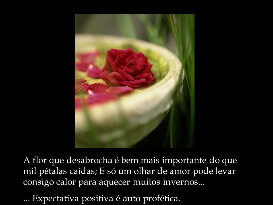 A flor que desabrocha é bem mais importante do que mil pétalas caídas; E só um olhar de amor pode levar consigo calor para aquecer muitos invernos....