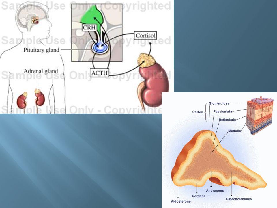 US: -excelente relação custo-benefício -benigno x maligno: baixa especificidade Papel do usg: -determinar se nódulo palpável é da tireóide -guiar biópsia percutânea -rastreamento para câncer de tireóide -identificar doença recorrente com câncer já conhecido CT e RM: -complemento do US -estadiamento de câncer invasivo -recorrência pós-operatória -estudo de bócio mergulhante Cintilografia: -função da glândula -determinar a atividade do nódulo.