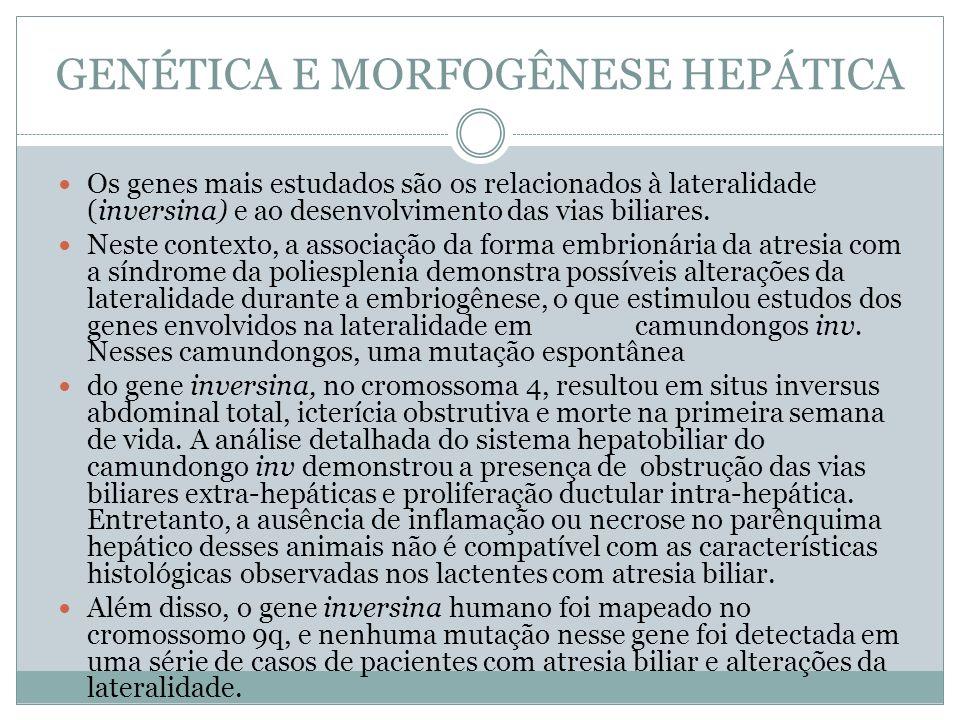 GENÉTICA E MORFOGÊNESE HEPÁTICA Os genes mais estudados são os relacionados à lateralidade (inversina) e ao desenvolvimento das vias biliares. Neste c