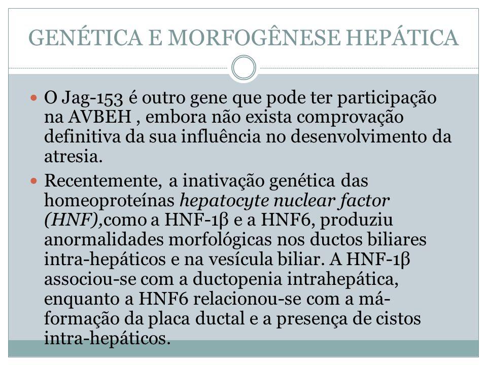GENÉTICA E MORFOGÊNESE HEPÁTICA O Jag-153 é outro gene que pode ter participação na AVBEH, embora não exista comprovação definitiva da sua influência