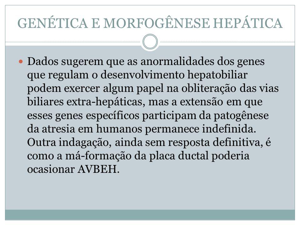 GENÉTICA E MORFOGÊNESE HEPÁTICA Dados sugerem que as anormalidades dos genes que regulam o desenvolvimento hepatobiliar podem exercer algum papel na o