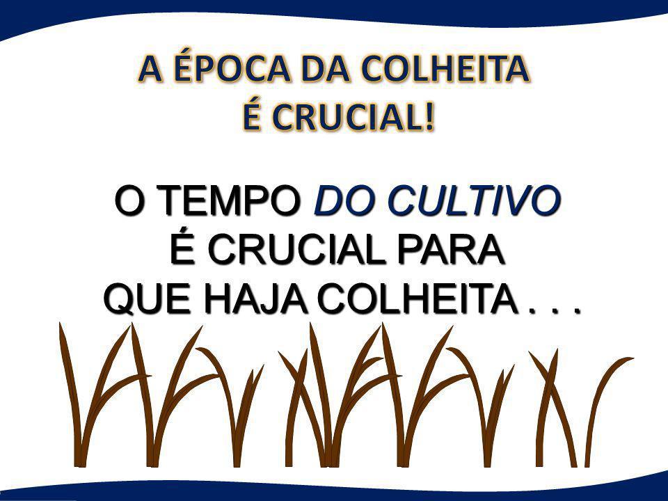 O TEMPO DO CULTIVO É CRUCIAL PARA QUE HAJA COLHEITA... QUE HAJA COLHEITA...