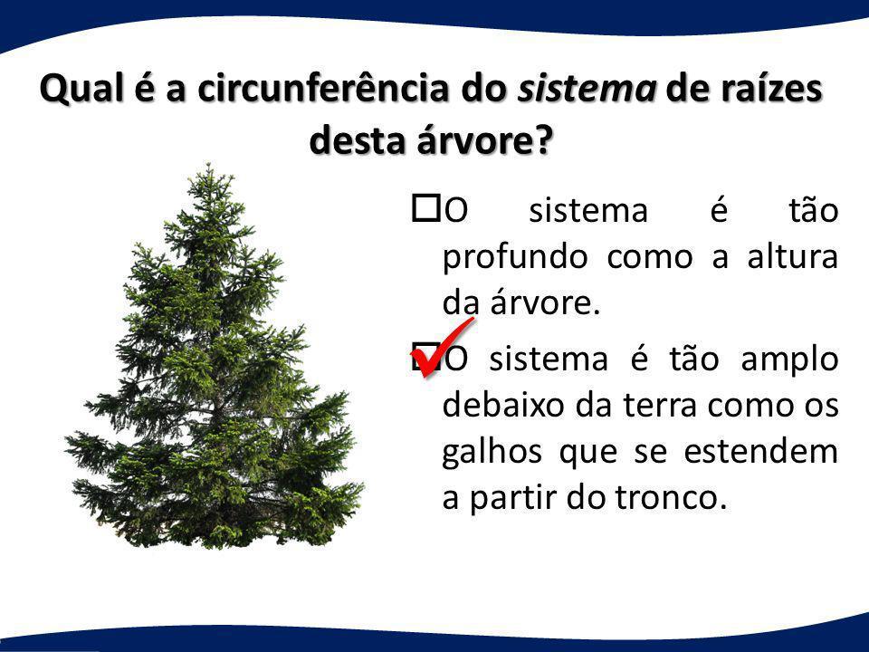 Qual é a circunferência do sistema de raízes desta árvore? oO sistema é tão profundo como a altura da árvore. oO sistema é tão amplo debaixo da terra