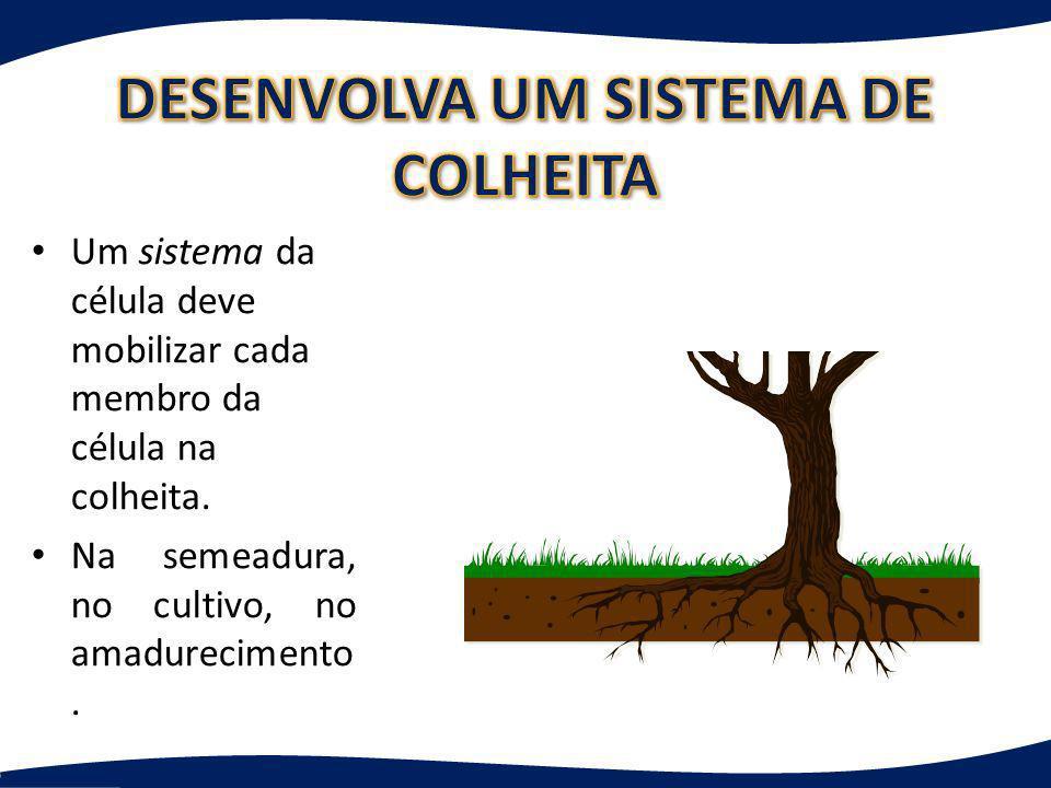 Um sistema da célula deve mobilizar cada membro da célula na colheita. Na semeadura, no cultivo, no amadurecimento.