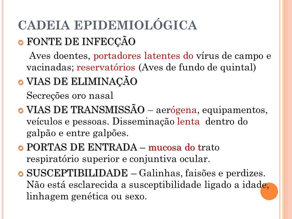 CADEIA EPIDEMIOLÓGICA FONTE DE INFECÇÃO FONTE DE INFECÇÃO Aves doentes, portadores latentes do vírus de campo e vacinadas; reservatórios (Aves de fund