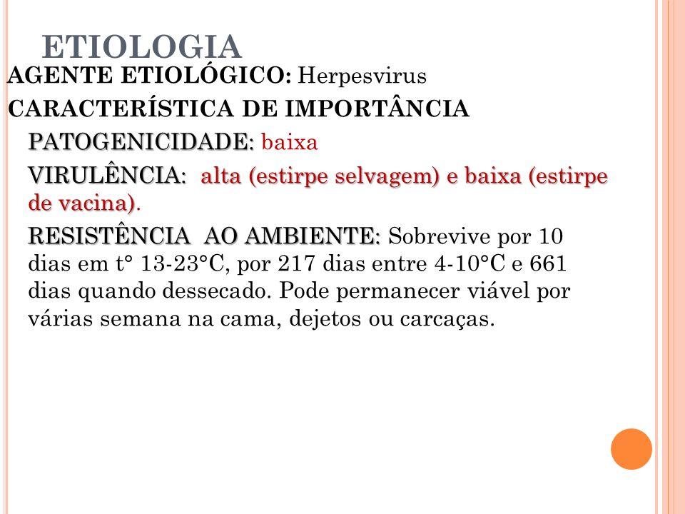 ETIOLOGIA AGENTE ETIOLÓGICO: Herpesvirus CARACTERÍSTICA DE IMPORTÂNCIA PATOGENICIDADE: PATOGENICIDADE: baixa VIRULÊNCIA: alta (estirpe selvagem) e bai