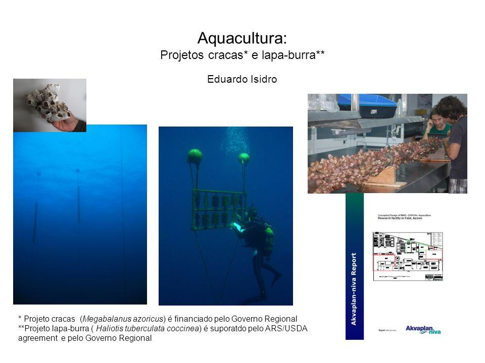 Aquacultura: Projetos cracas* e lapa-burra** * Projeto cracas (Megabalanus azoricus) é financiado pelo Governo Regional **Projeto lapa-burra ( Halioti